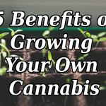Grow Your Own Cannabis